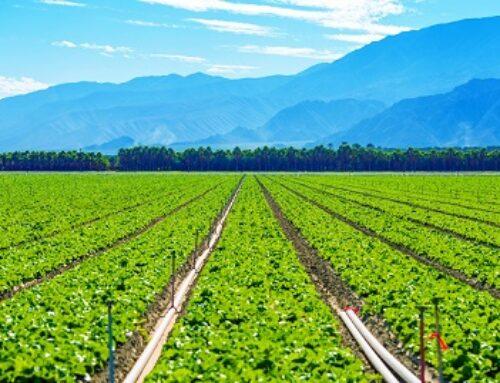 Produtor de cana-de-açúcar impulsiona produtividade com irrigação por gotejamento enterrado