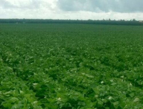 Presidente da Coocam diz que mais da metade da safra 2020/2021 da soja que vai ser plantada já foi vendida