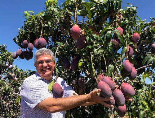 Fruticultura brasileira trabalha por números melhores no mercado externo
