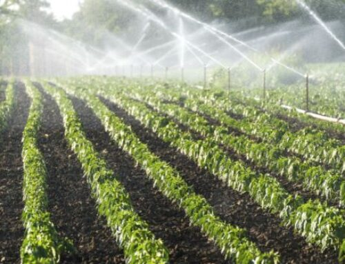 Brasil pode ampliar potencial de agricultura irrigada, diz ministra